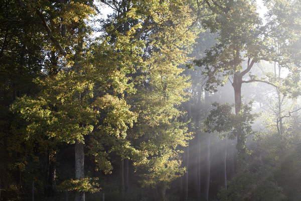Autumn light Sadirac France © Godong / Bridgeman Images