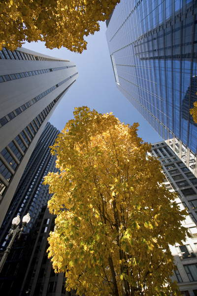 USA, Illinois, Chicago, skyscrapers and trees with autumn leaves in the Downtown Loop  Dorling Kindersley UIG  Bridgeman Images