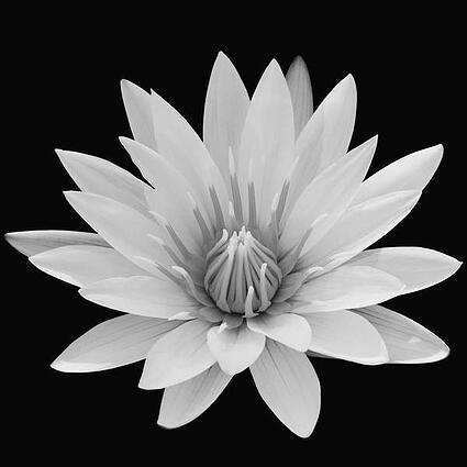 a monochrome photograph of a grey flower on a black background