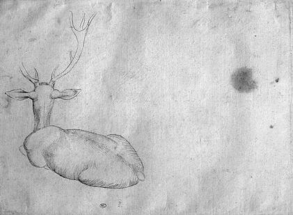 a monochrome sketch of a deer lying down as viewed from behind
