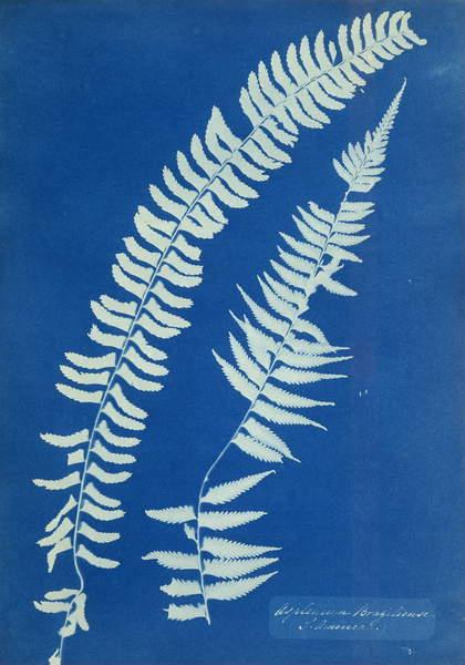 Asplenium Braziliense, South America, c.1850 (cyanotype, mounted, unique print), Atkins, Anna (1799-1871)  Private Collection  Photo © Christies Images  Bridgeman Images