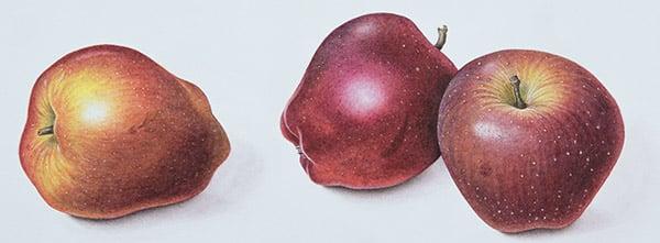 Red Apples, 1996, Margaret Ann Eden / Private Collection / Bridgeman Images