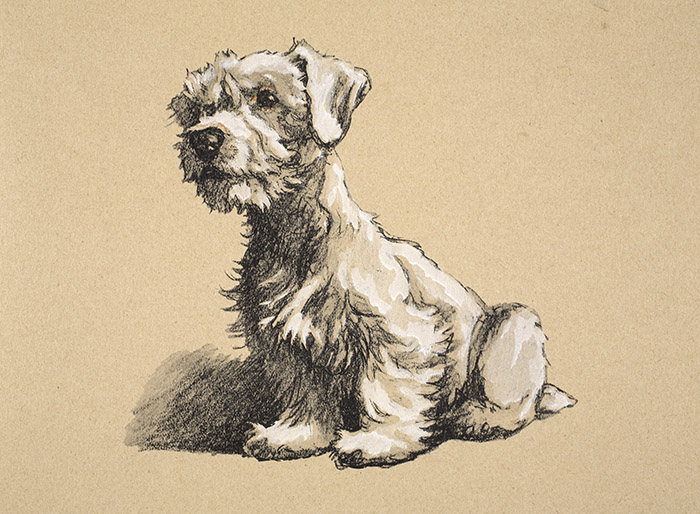 Sealyham, 1930, Illustrations from his Sketch Book used for 'Just Among Friends' by Cecil Aldin (1870-1935) / Bridgeman Images