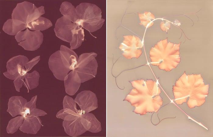Left: Six Orchids, Angela Easterling Right: Vine (photogram) by Angela Easterling