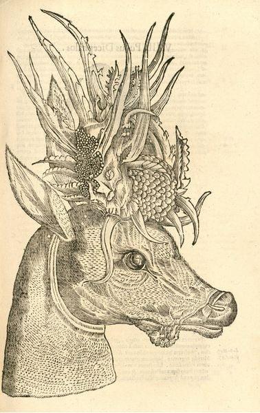 colouring-book-antlers-deer-capreolus