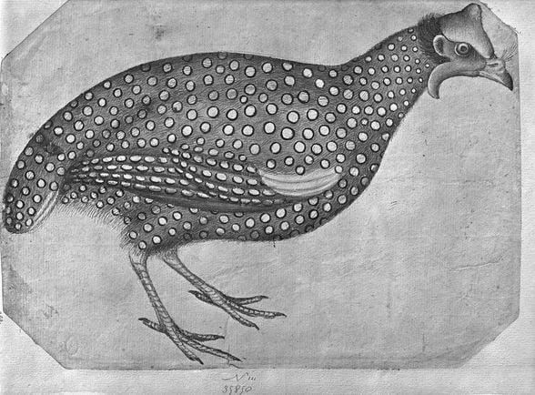 colouring-book-bird-animal-spots