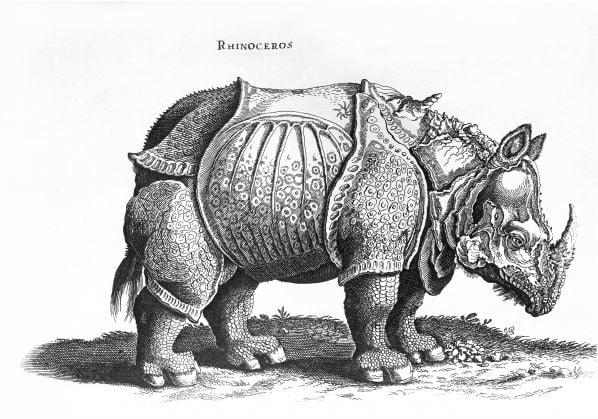 colouring-book-rhinoceros-durer-engraving