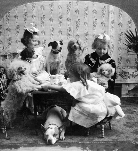 TEA PARTY, c.1906 A posed studio portrait of three girls having a tea party with six dogs. Stereograph, c.1906. / Photo © Granger