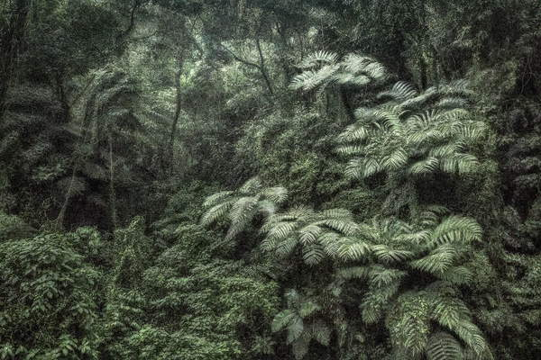 photo of plants that grow under the tropical forest, green and black tones only, A Picturesque Voyage through Brazil 144, 2017 (photo), Vasconcellos, Cassio (b.1965)  © Cassio Vasconcellos  Bridgeman Images 6353136