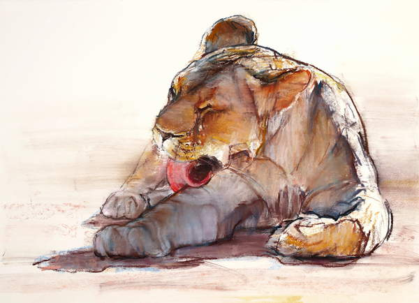 watercolour of a young lion leaking its paw Tongue Bath, 2019, (conté and pastel on paper), Adlington, Mark  Private Collection  Bridgeman Images 6352841