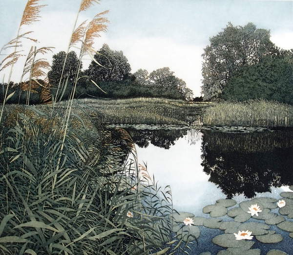 view of a corner of a pond, water, waterlilies, reflections Wicken Fen, 1982 (etching and aquatint), Greenwood, Phil (b.1943)  © Phil Greenwood  Bridgeman Images 6323367